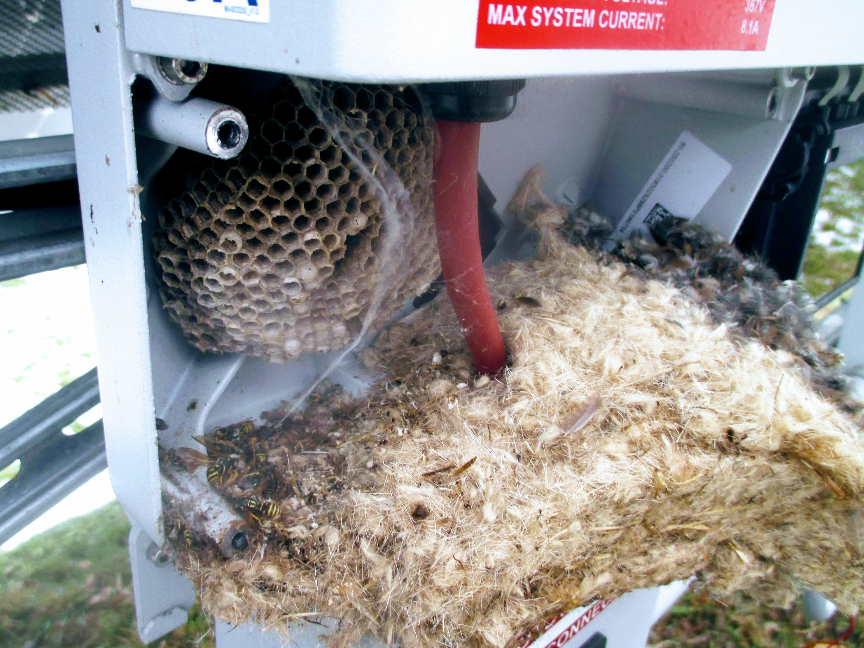 mice AND wasps co-habitating inside an inverter